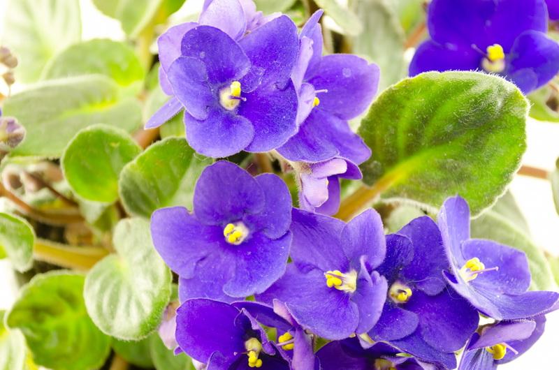 Топ-6 комнатных растений, которые легко можно размножить в домашних условиях