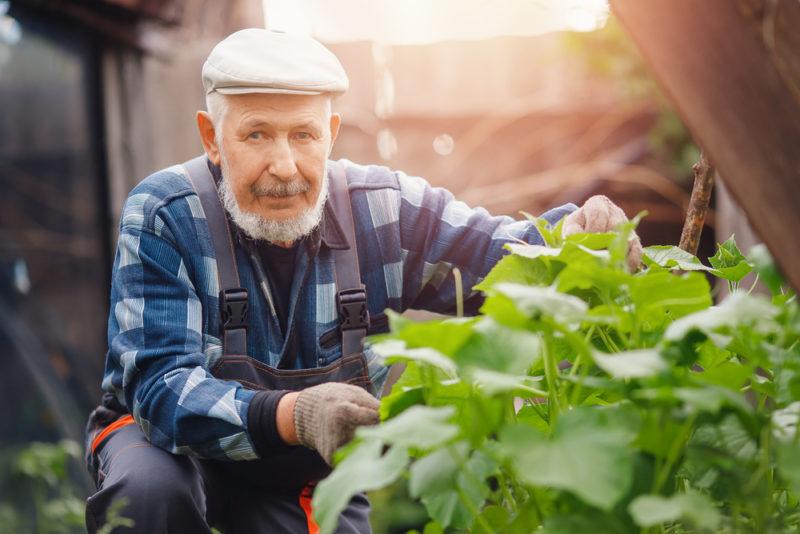Причины отсутствия завязей огурцов — как бороться с пустоцветом