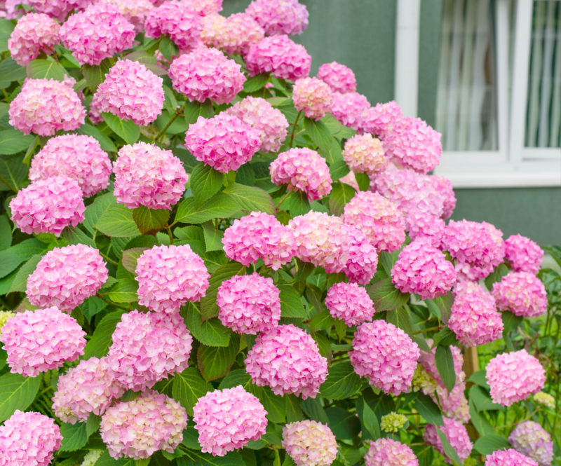 Благоухающий цветник даже на кислой почве: какие растения можно посадить, особенности и описание