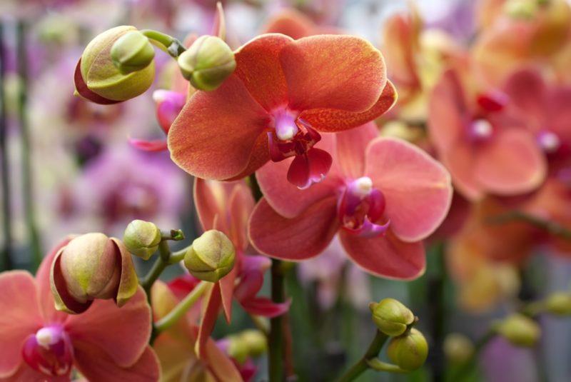 Как правильно обрезать орхидею: порядок действий при обрезке, значение процедуры