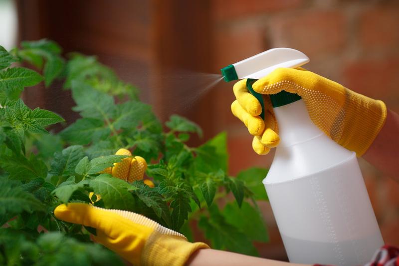 Борная кислота для завязи томатов: правила приготовления раствора
