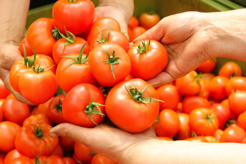 Выращиваем богатый урожай томатов в условиях засушливого лета