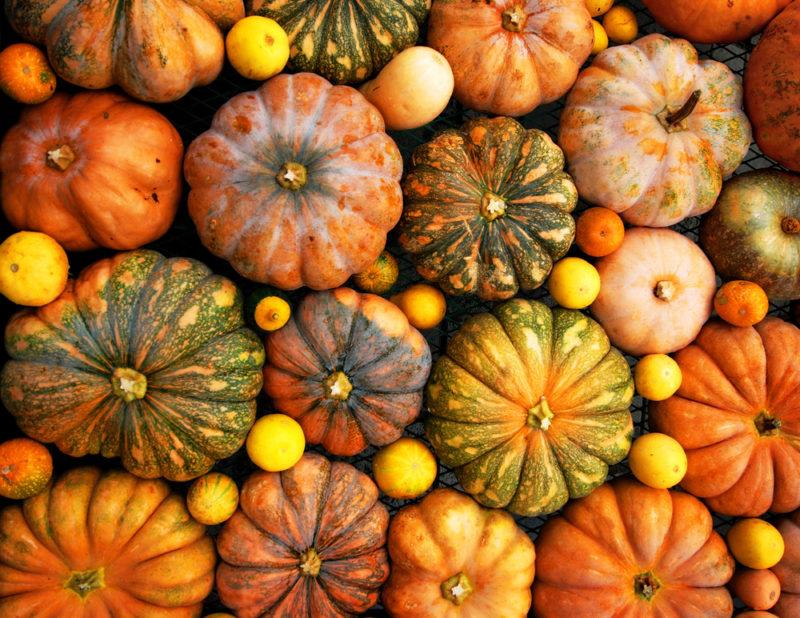 Выращивание тыквы на семена: лучшие сорта для личного потребления и бизнеса