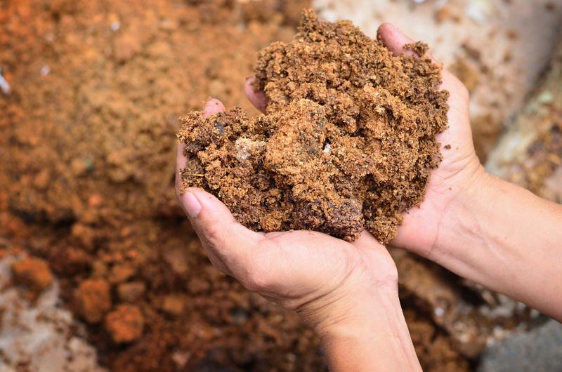 Правила подкормки свеклы: какие элементы необходимы растению, чтобы сформировать вкусные корнеплоды, правила внесения