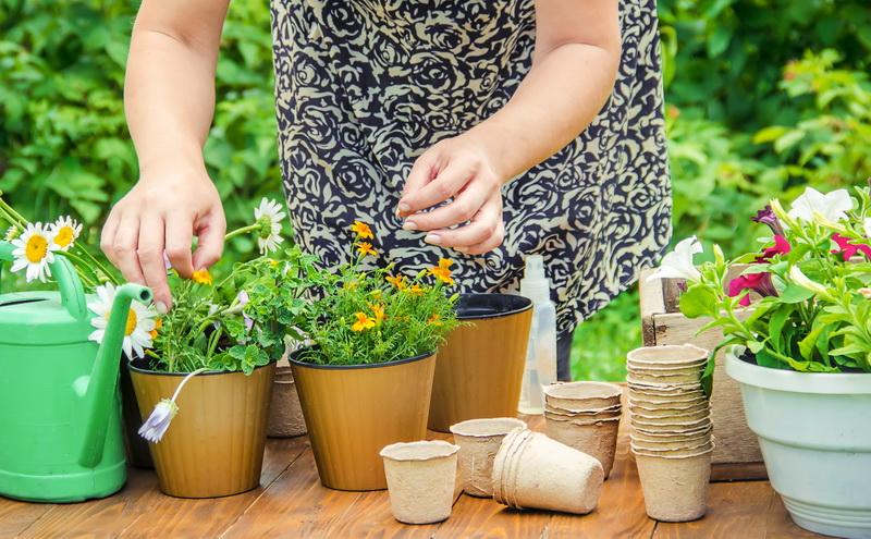 Дренаж для комнатных цветов, чтобы они хорошо развивались