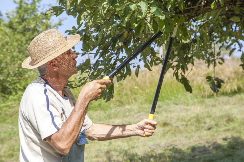 Как бороться с монилиозом плодовых культур