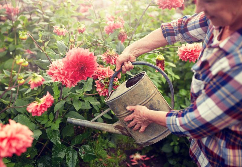 Эффектные и неприхотливые низкорослые цветы