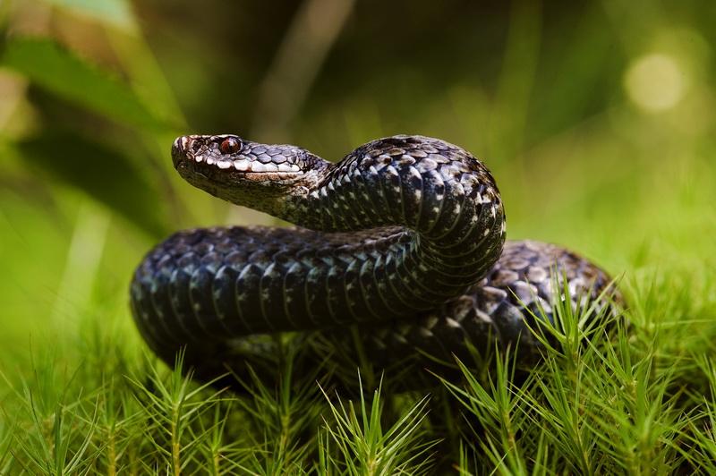Отпугиватели змей: принцип работы, преимущества и недостатки, разновидности