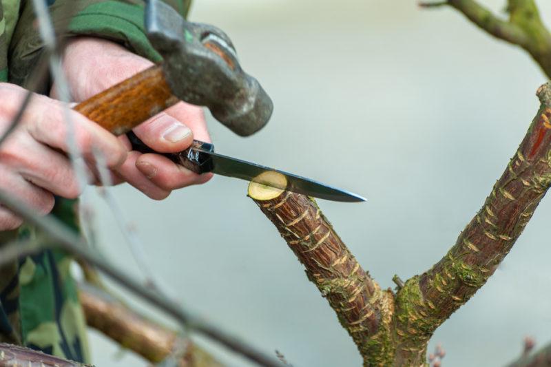 Прививка садовых деревьев с помощью дрели