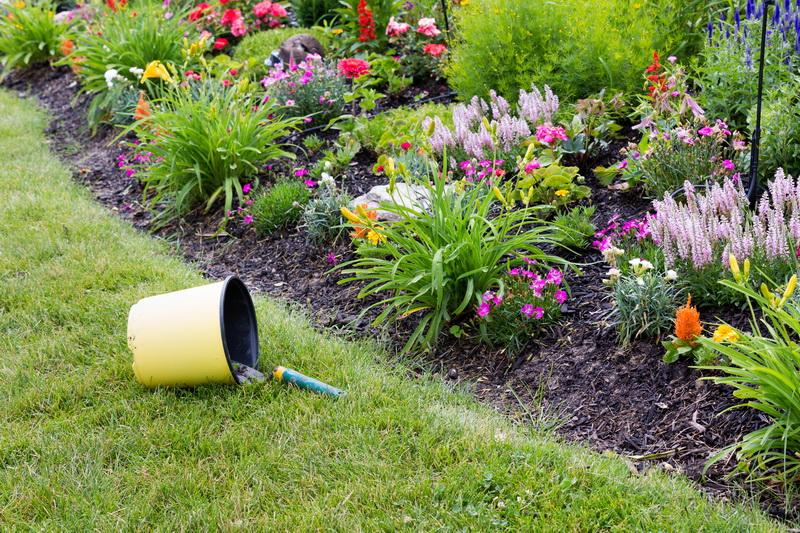 Основные виды работ в цветнике в конце лета
