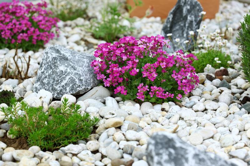 Какие растения подойдут для альпинариев
