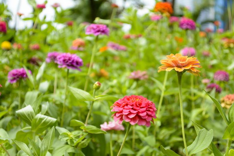 Красота осенней клумбы: что посадить?