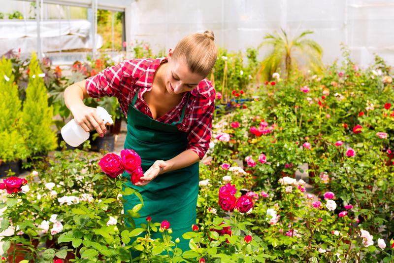 Какие болезни угрожают розам в саду: основные виды и способы борьбы