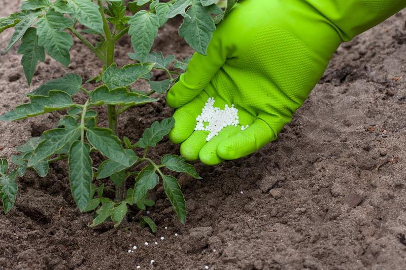 Мочевина — минеральное удобрение для помидоров