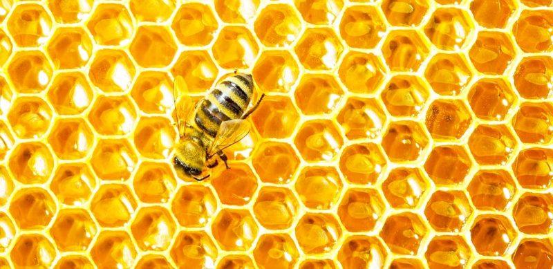 Особенности параметров ячеек пчелиных сот