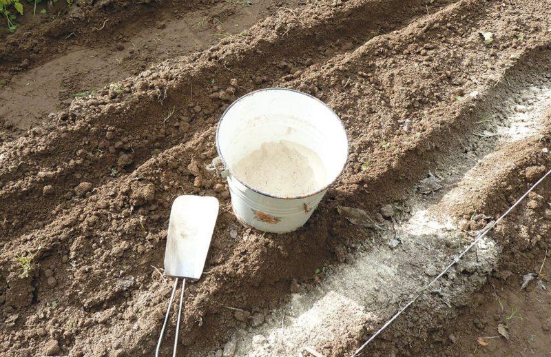 Известкование грунта: нормы и периоды внесения вещества
