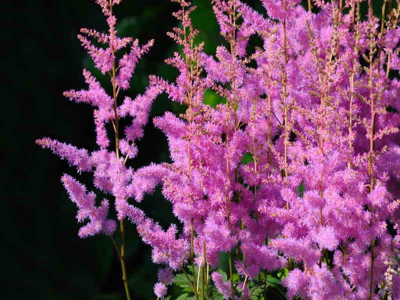 Многолетние цветы, которые я всегда сажаю и пересаживаю осенью