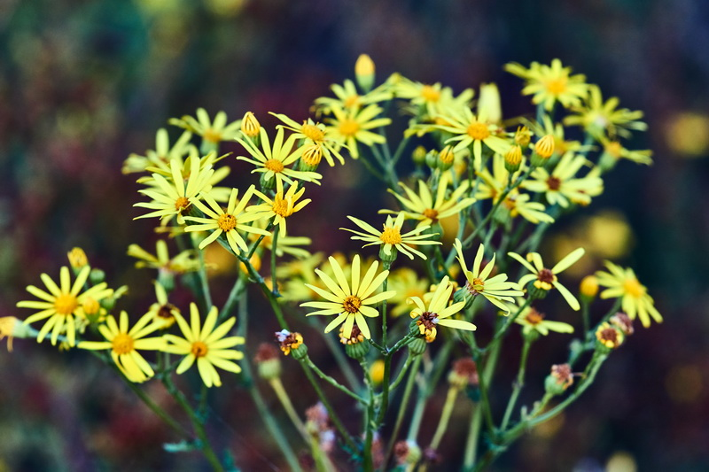 Какие цветы и как я сажаю под зиму, остальные лучше оставить до весны