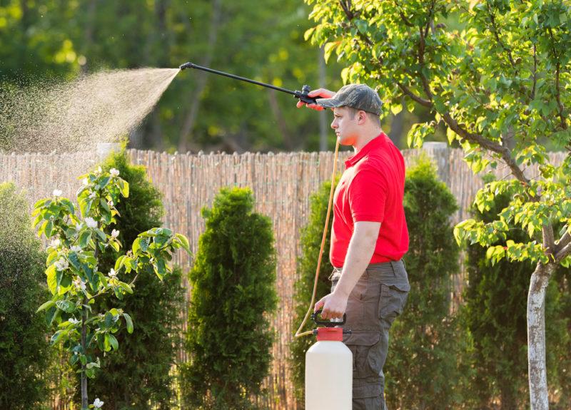Такая простая и такая эффективная искореняющая обработка сада осенью. Как легко уничтожить болезни и вредителей