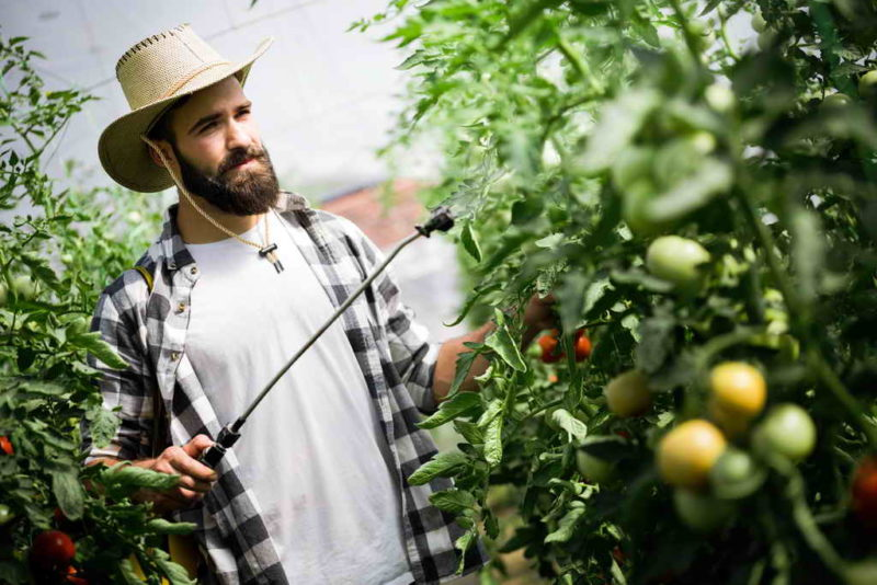 Зеленка и йод для опрыскивания томатов