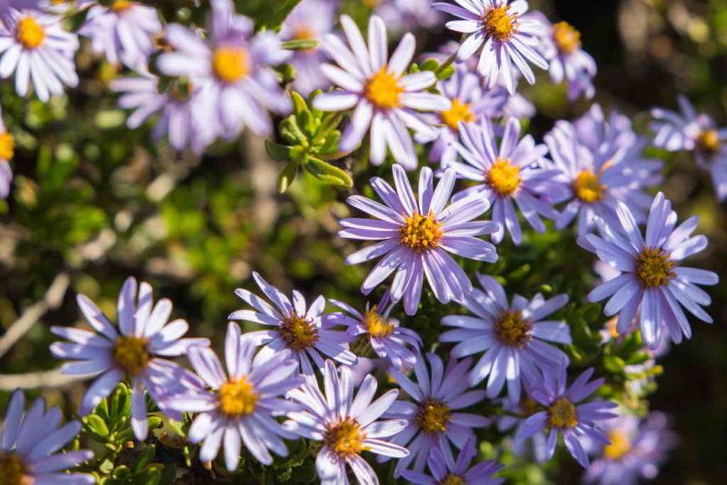 Эффектные осенние цветы — популярные растения, которые украшают сад до наступления морозов