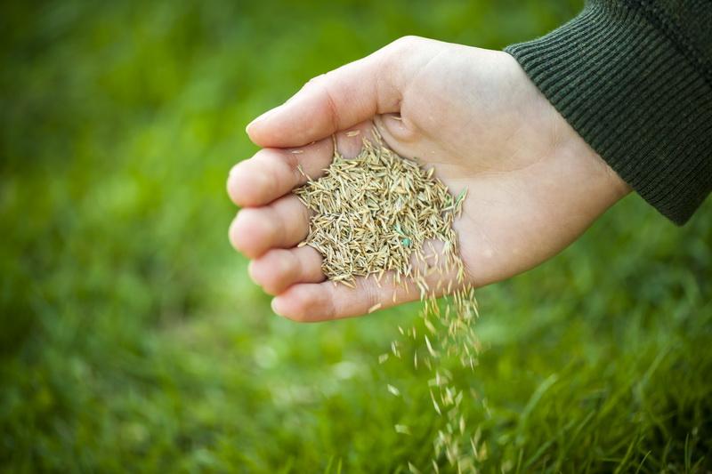 Мой опыт посадки зеленого газона осенью: особенности процесса и какой уход необходим
