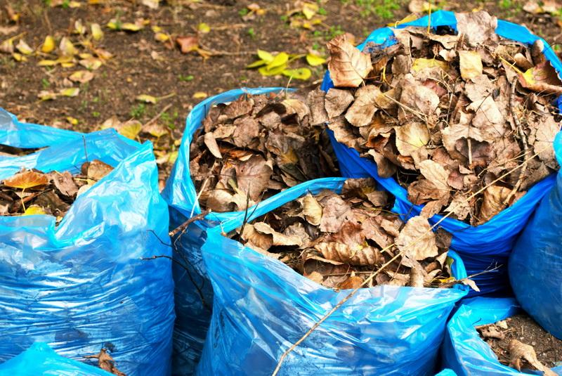 Почему стоит оставлять на земле опавшую листву