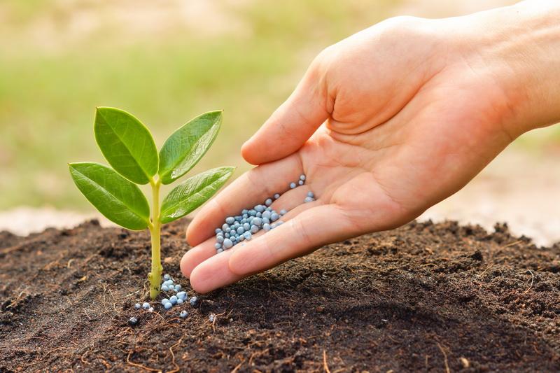 Польза внесения удобрений в грунт осенью