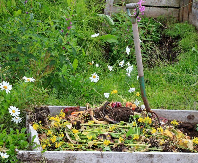 Осень — лучшее время для подкормки растений. Мои полезные и доступные советы начинающим садоводам — на собственном опыте