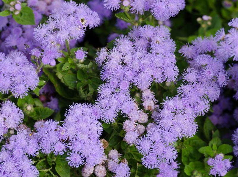 Как сделать сад нарядным и ярким даже хмурой осенью. Какие цветы посадить на клумбе, чтобы они цвели с августа и по ноябрь