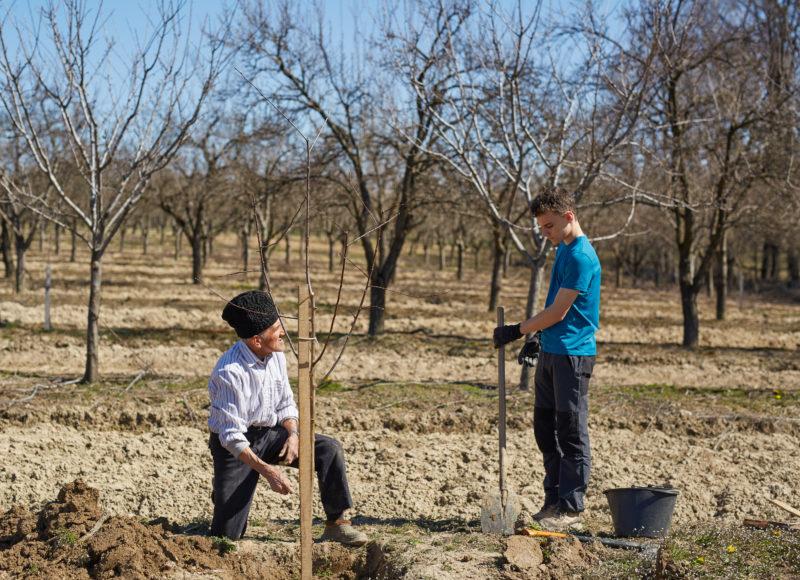 Как я сажаю плодовые деревья осенью: основные правила для отличной приживаемости, развития и будущих впечатляющих урожаев