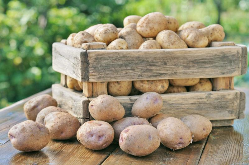 Как хранить картофель: подготовка и требуемые условия