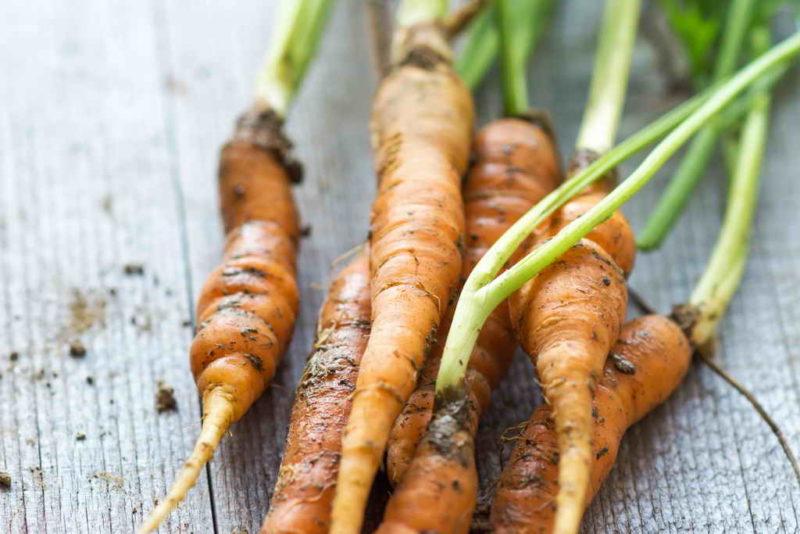 Вредители моркови на огородной грядке и эффективные способы борьбы с ними