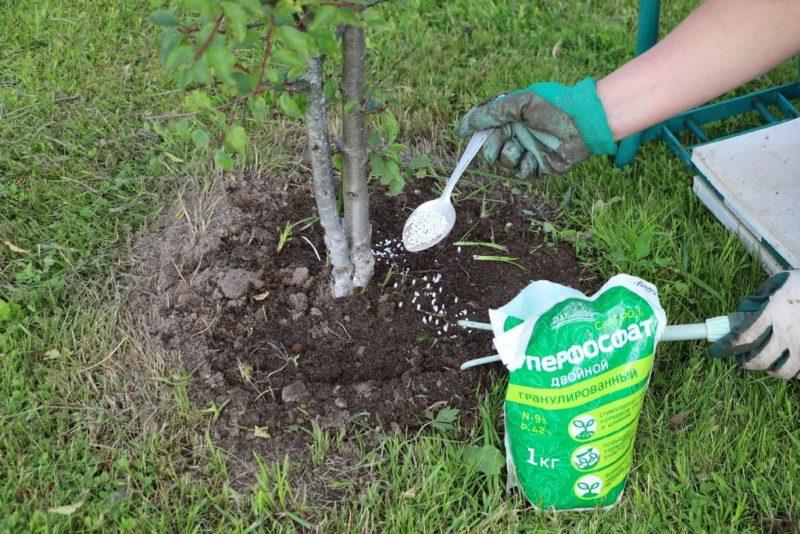 Применение удобрений на приусадебном участке осенью