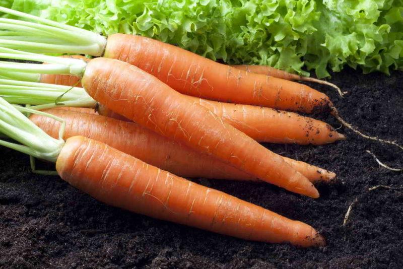 Я часто и очень успешно сею морковь под зиму: зачем, как и когда