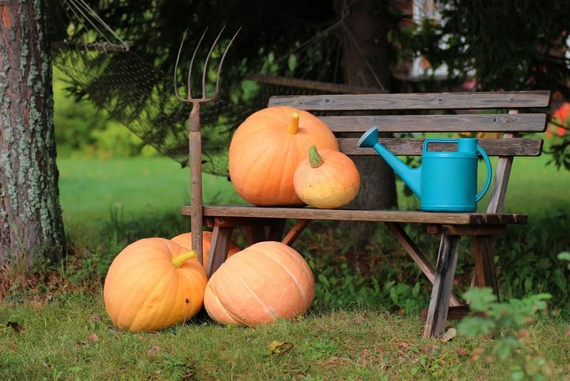 Мой личный перечень обязательных садовых работ в октябре — ничего не пропускаю, и это идет на пользу моему участку