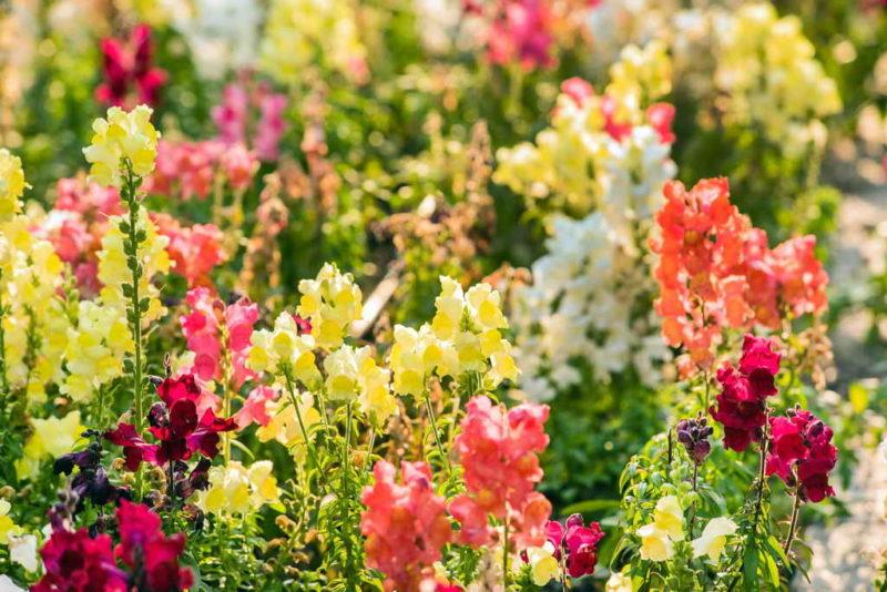 Многие свои цветы я сажаю под зиму, и это отличное решение. Рассказываю, как это правильно делать и какие растения подходят