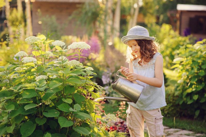Как я правильно готовлю свои гортензии разных видов к зимовке: простые и своевременные советы опытных садоводов. Зима пройдет успешно