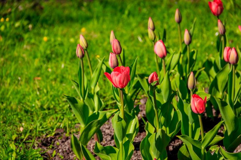 Весеннецветущие растения: какие цветы я сажаю осенью, чтобы они радовали своим цветением как можно раньше