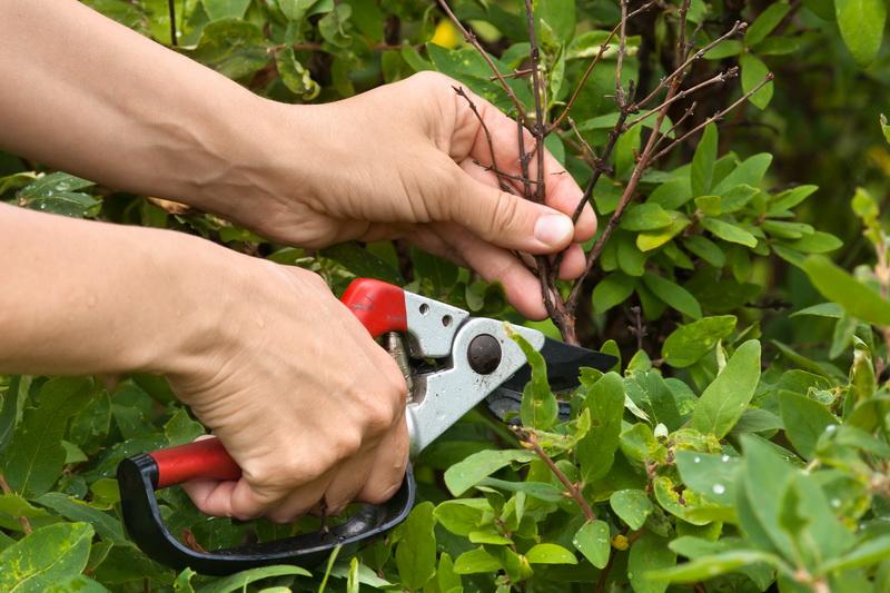 Мои секреты обрезки ягодных кустарников: как грамотно и когда необходимо осуществить процедуру