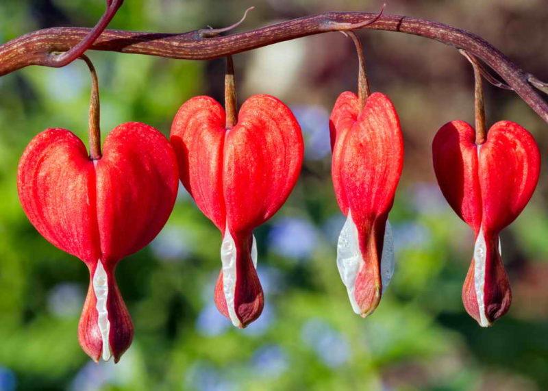 Как готовить к зиме эти 9 популярных цветов: основные рекомендации и правила — зимуем без потерь