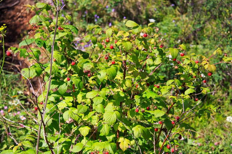 Зима у меня в саду, огороде и цветнике проходит без потерь — осенью я использую правильные удобрения. Рассказываю какие и как