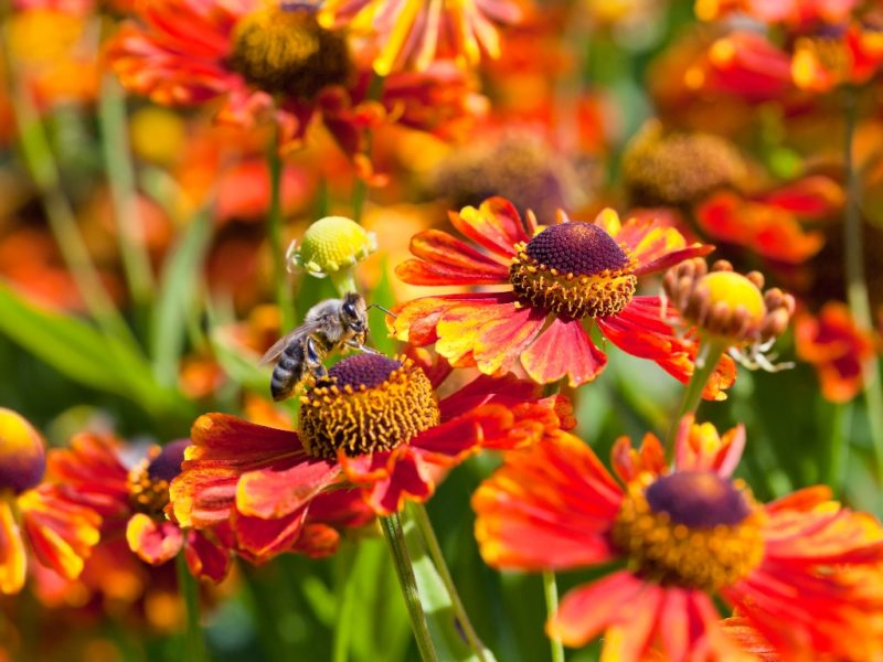 Топ-8 впечатляющих растений для вашего осеннего сада