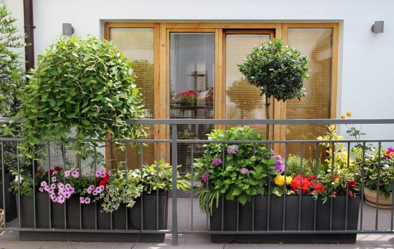 Как зимуют мои балконные цветы — что делать с однолетниками и многолетниками по окончании теплого сезона