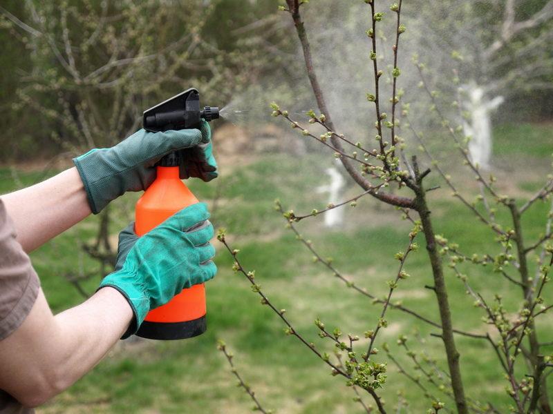 Как я готовлю сад к зиме и провожу осенние обработки растений против заболеваний и вредителей