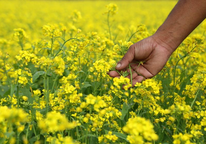 Обязательно подкармливаю в конце сезона цветник, садовый и огородный участок. Какие удобрения использую при этом