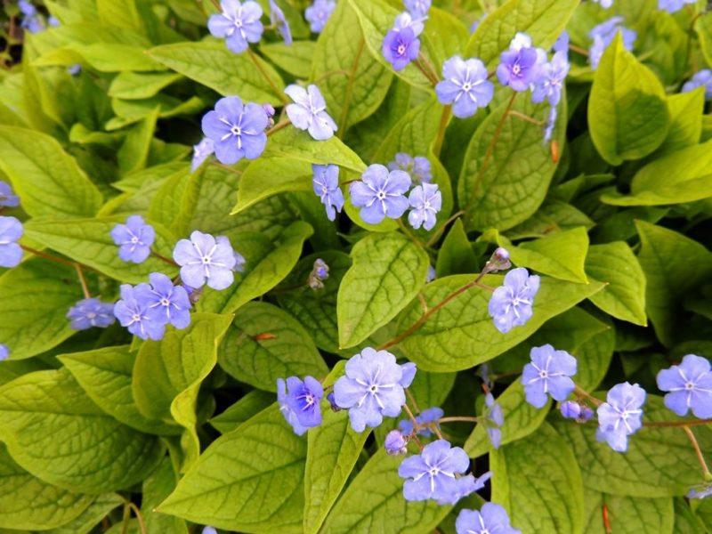 5 моих любимых многолетних растений для цветника, которые я выращиваю исключительно ради их шикарной листвы