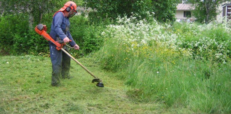 Никогда не выбрасываю скошенную траву — всегда применяю ее на участке с пользой. Рассказываю как