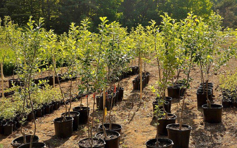 Отвечаю на главные вопросы о саженцах. 14 важных моментов, которые тревожат дачников, желающих завести плодовые деревья