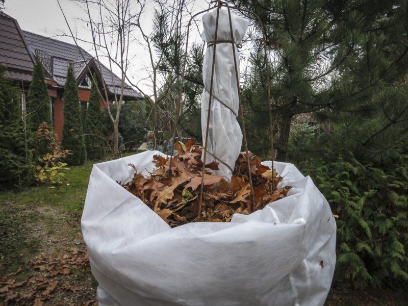 Готовлю мои фруктовые деревья, посаженных под зиму, к суровым морозам — тщательно продуманный алгоритм и никаких потерь